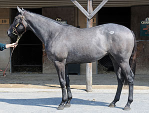 Malibu Moon Filly Brings $300,000 at FT Sale