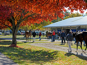 F-T Fall Sale Offering More Quality Yearlings