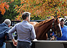 Records Fall as Fasig-Tipton Oct. Sale Ends