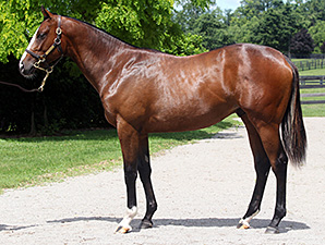 Wounded Warrior Stable Lands Tapit Colt