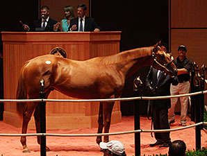 Pope Goes to $420,000 for Bellamy Road Colt