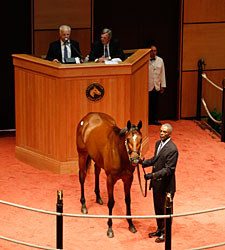 Strong Interest for Horses of Racing Age Sale