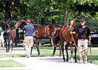Average Up at Fasig-Tipton Kentucky July