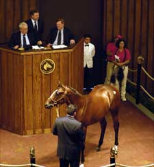 Fasig-Tipton Sale Opens With Decline in Average; Buy-Back Rate Soars
