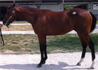 F-T Kentucky: Hip 154 Cowboy Cal--Refugee