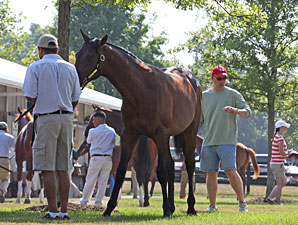 Profits Rise for Breeders at F-T July Sale