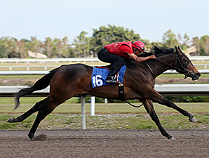 Stonestreet Lands Malibu Moon Filly