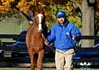 Host of Grade I Winners Figure to Fuel Fasig-Tipton Sale