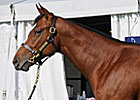 Harlan's Holiday Colt Sells for $300,000