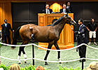 New York-Bred Sale Soars in All Categories