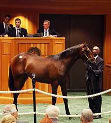 F-T NY-Bred Sale Posts Across-the-Board Gains