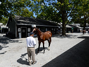 New York-Bred Sale Expected to Post Gains