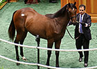 War Front Filly is New Sale-Topper at $1.25M