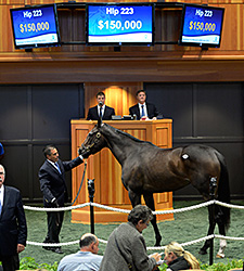 Secret Union Tops F-T Saratoga Sale