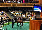 FT Saratoga $1.25M Sale-topper in the Ring