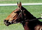 Oh, Miesque, What a Filly! - By Steve Haskin
