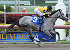 Flashy Gray Makes Stakes Debut in Honeybee