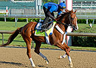 KY Derby: Stanford Out, Frammento In
