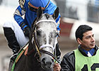 Frosted Looking to Rebound in Wood Memorial