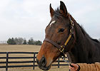 Fun House Named KY Broodmare of the Year