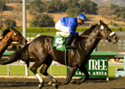 Godolphin's Gayego Gallops in Ancient Title