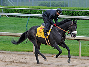 Gayego Now Possible for Preakness