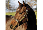 First Winner, Stakes Winner for Ghostzapper