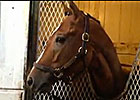 Breeders' Cup: Dirt Mile Runner Goldencents