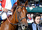 Groupie Doll Ready for Breeders' Cup