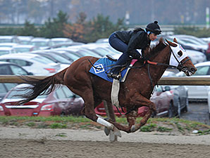 Groupie Doll Breezes at Belmont Park
