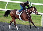 Havre de Grace in Smooth Work at Keeneland