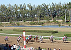 Hialeah Keeps Thoroughbred Options Open