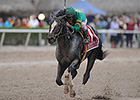 Honor Code Tops Alysheba Lineup