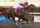 Ice Box Slams Door at 20-1 in Florida Derby