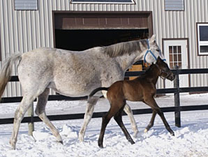 Marcavelly Sires First Offspring