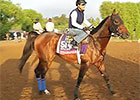 Breeders' Cup News Update for Oct. 27, 2014