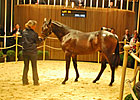 Invincible Spirit Colt Leads Way at Deauville