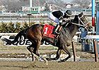 Delaware Oaks Lures Joint Return, Vero Amore