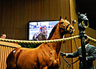 Keeneland Catalogs 1,590 for January Sale