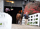 Keeneland Nov. Sale Ends With Big Upswings