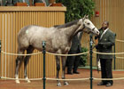 Keeneland November Sale Day 4 Wrap