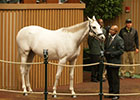 Don Alberto Pays $2.85M for Tapit Filly