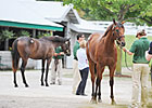 Keeneland Sale Posts Large Gains Sept. 17