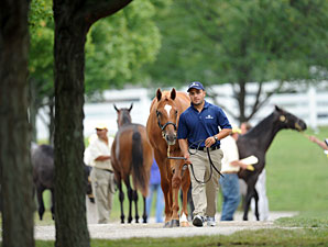 Looking Back: Horsemen Discuss Sept. Sale