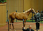 A.P. Indy Era Ends at September Yearling Sale