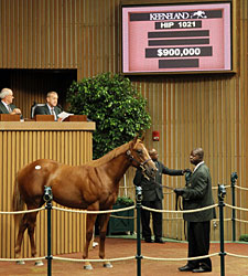 Smart Strike Colt Brings $900,0000
