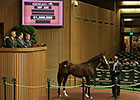 Coolmore Buys War Front Colt for $1.3 Million