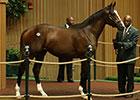 Shadwell Goes to $1.1 Million for Tapit Colt