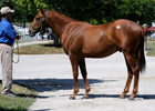 'Bargain' Storm Cat Colt Brings $450,000