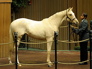 Chowhan Purchases Palomino Filly